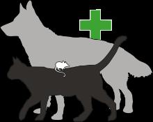 Tierheilpraxis Nella Kartel